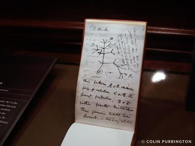 Darwin's 1837 tree of life sketch