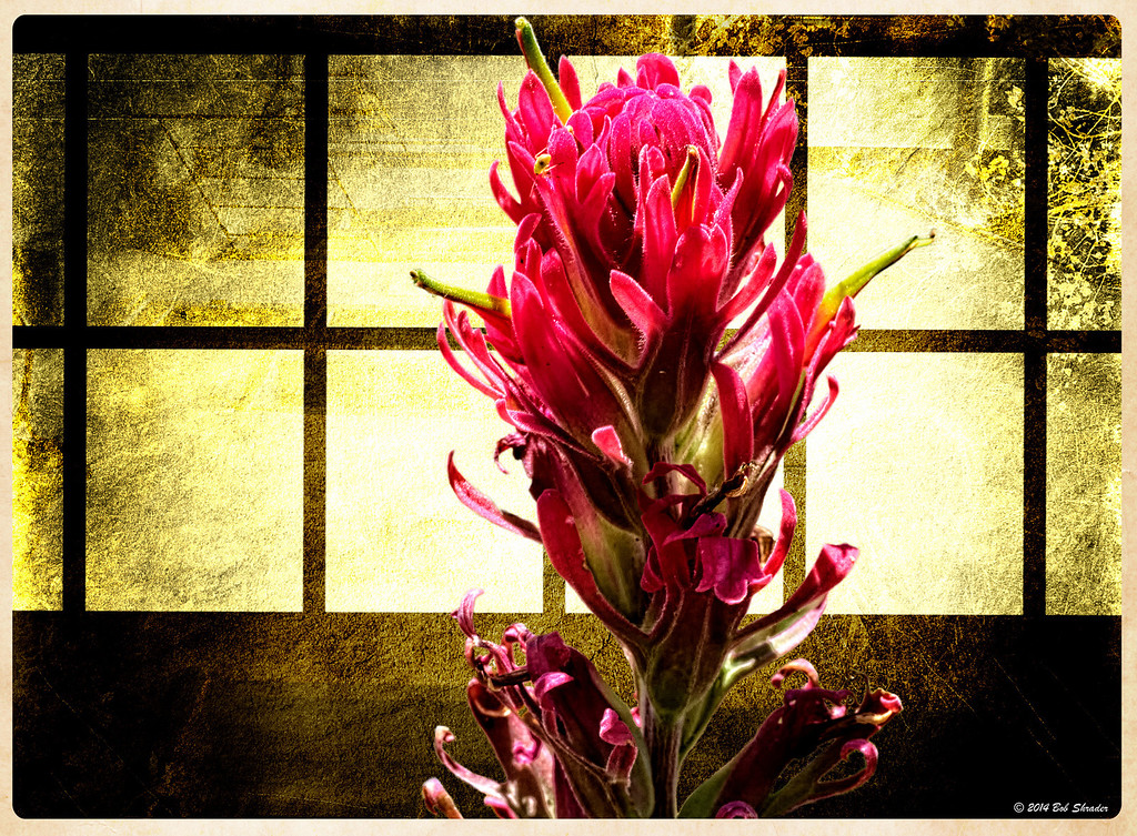 Wildflower in the Window
