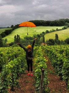 """Umbrella in the wine fields of Burgundy"""