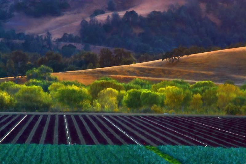 Salinas Valley Field