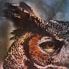 Wisdom, owl, eye