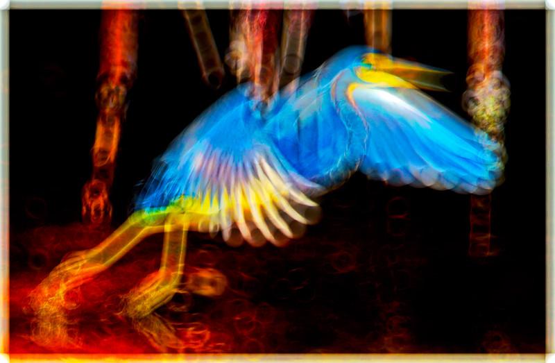 Blue  Heron  ?