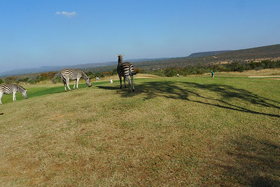 Wildlife at Legends Golf and Safari Club, South Africa.  Longest course in the world.......7200m from the White tees.