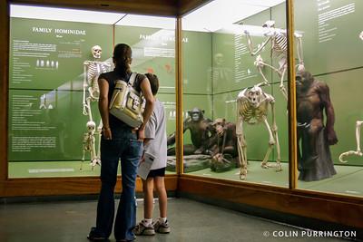 Hominidae exhibit
