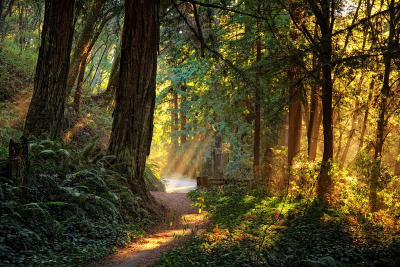 Nisene Marks Forest, Aptos