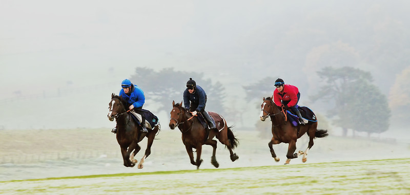 On  the  gallops .