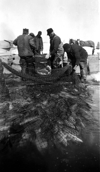 Men seining for fish at Bowdoin Lake, MT. According to the writing on the back of the photo (found at a flea market), they got 7 cents a pound :)