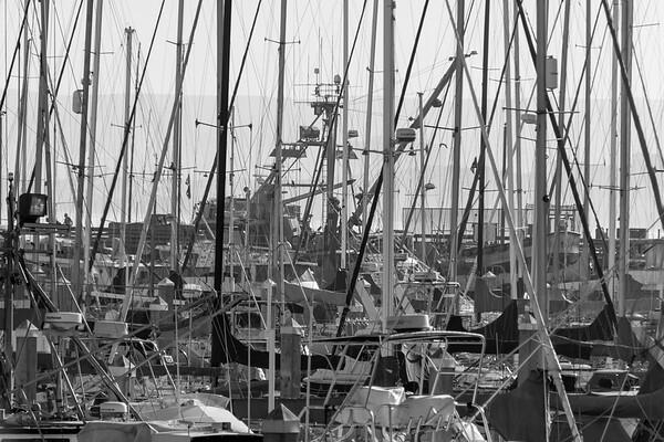 Monterey-1433