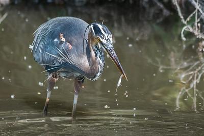 San Joaquin Wildlife Sanctuary-0395