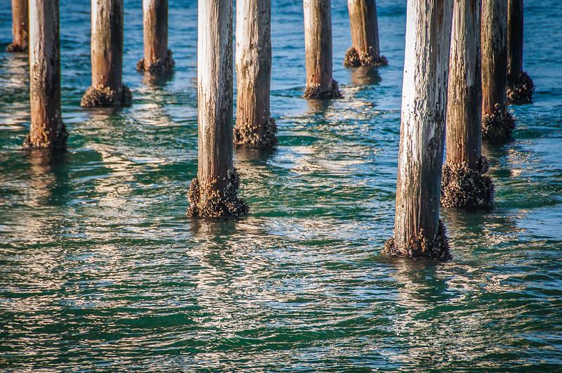 Balboa Peninsula-3826