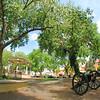 Old Town--Albuquerque, New Mexico