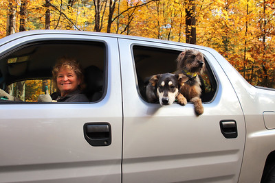 Terry & Truck Dogs1