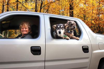Dogs in Truck2