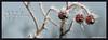 """Breath of God"" facebook timeline cover photo"