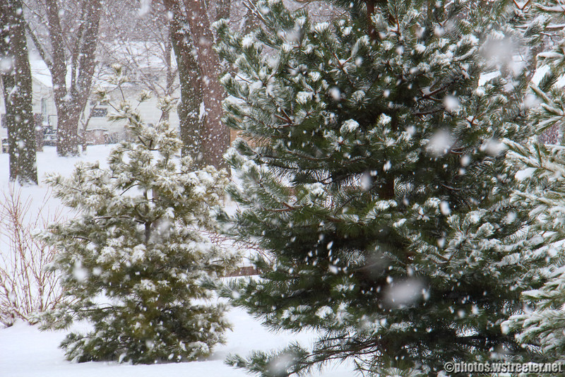 """Big Flake Snow<br /> <br /> The day after Christmas and my """"Where's the snow"""" photo we got a few inches of snow. Took this quick snapshot at a point in time when big snow flakes were peacefully falling from the sky."""