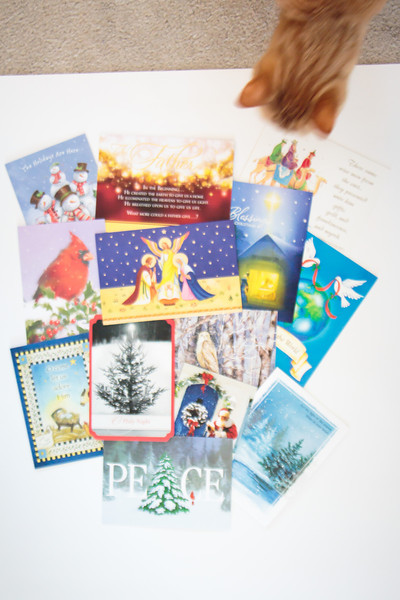 Christmas Cards and a Curious Cat