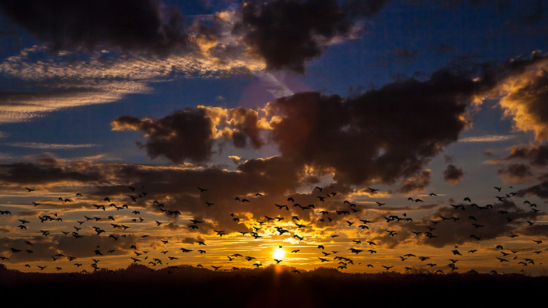 Hazard Sunset with Flock of Birds