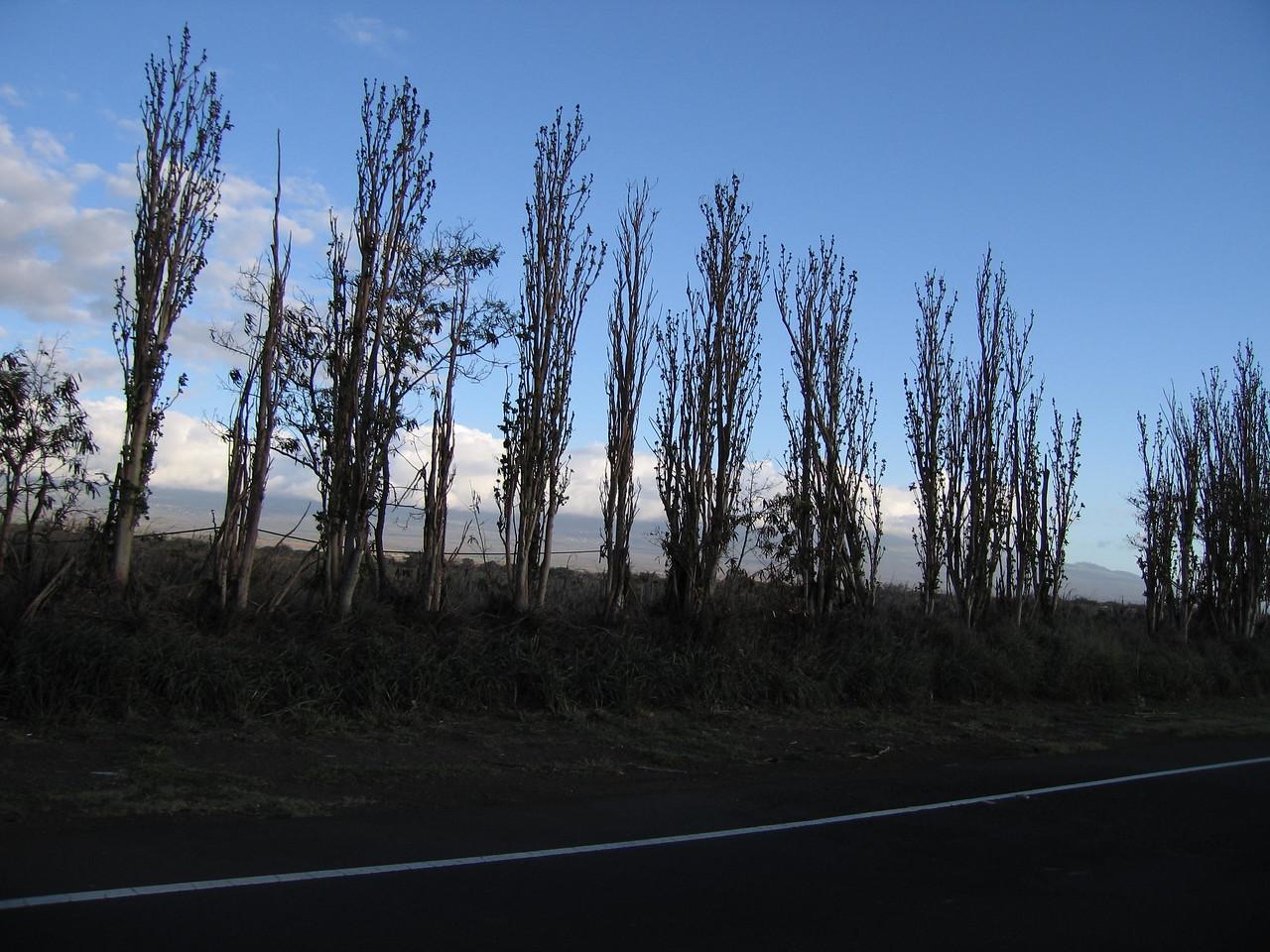 20060117_008529