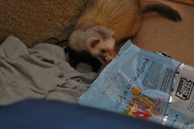 More ferret tongues.