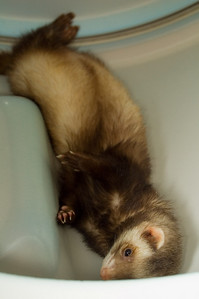 This is a re-enactment of her initial super relaxed otter-like pose. By now the dryer's cooled off and not as exciting.