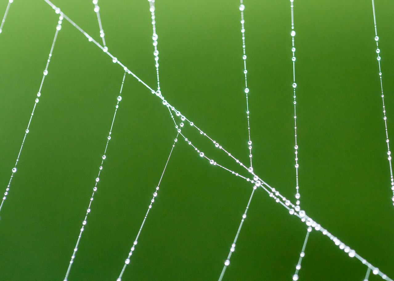 Beads if pearl-like water on a spider web