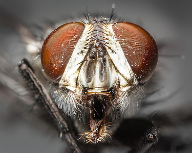 The lowly housefly