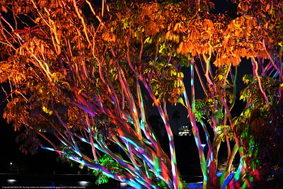 Sydney Vivid 2018: Exhibit in the Botanical Gardens