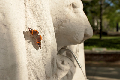 Butterfly on campus.