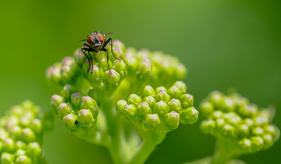 insect_ecu-7434.jpg