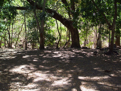 Into the shade of a mango grove. The shade and cool breeze was sure appreciated