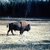 1959-Zion-Bryce-Yellowstone (20)