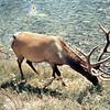 1959-Zion-Bryce-Yellowstone (19)