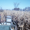 11 - Uncle Lawrence picking corn