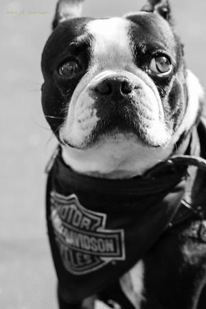Harley Davidson San Diego