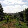 Brackenhurst is surrounded by tea plantations