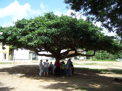 Tree & School