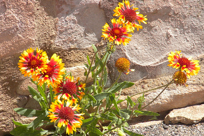 2009 Navajo Mission - Flowers on the Reservation