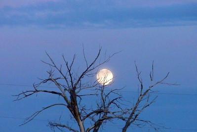 2009 Navajo Mission - Trees