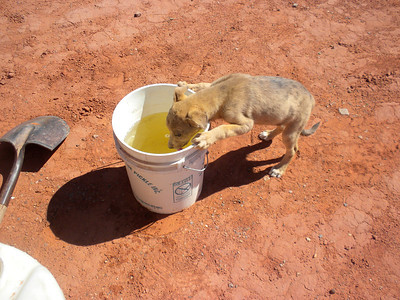 2010 Navajo Mission - Puppy - Notice Water Color