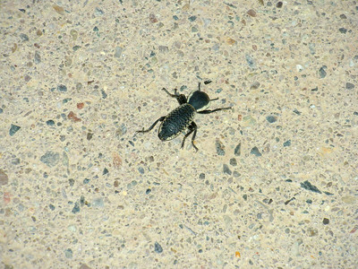2010 Navajo Mission - Bug