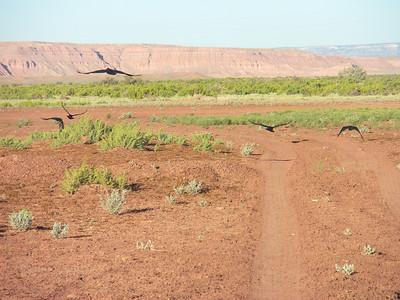 2010 Navajo Mission - Crows