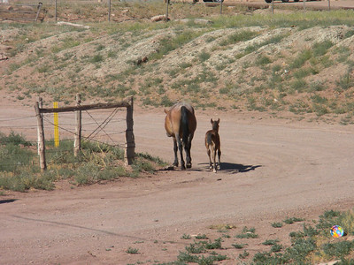 2010 Navajo Mission - Horses on the Reservation