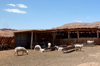 Navajo Mission - 2012 - Sheep Farm near Many Farms, Arizona