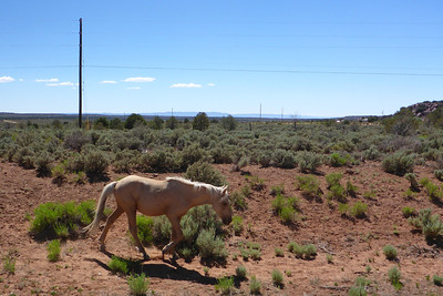 Navajo Mission - Chinle, Arizona - 2013 - Some of the animals seen while on the mission.