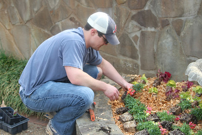 Jamie lining up the snapdragons like a pro. Lachance home by Donna Lachance 014