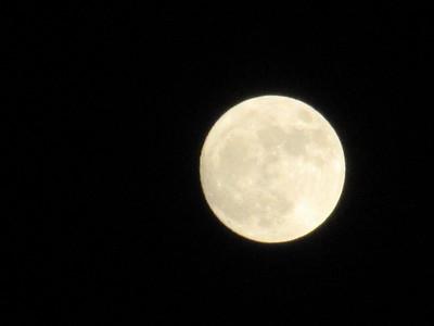 Azalea 11.14.16 and Super Moon