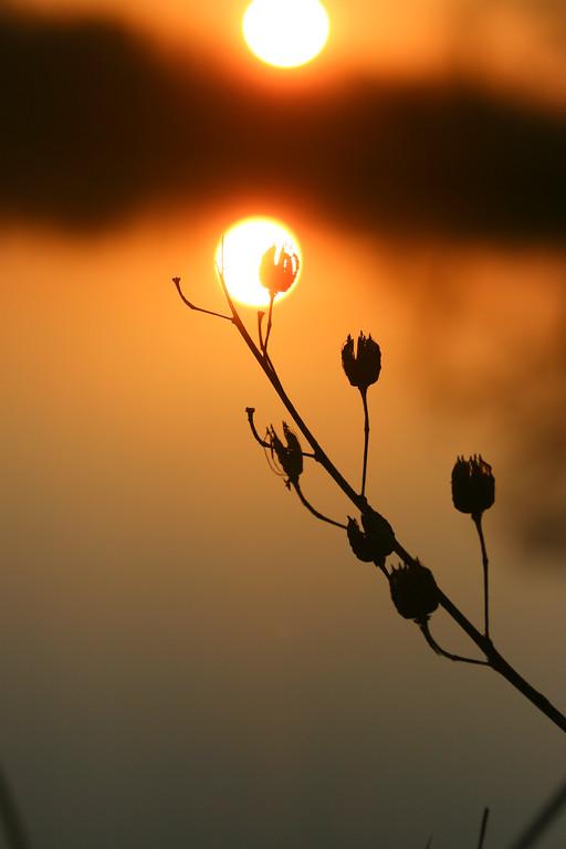 A beautiful delta sunrise or sunset!