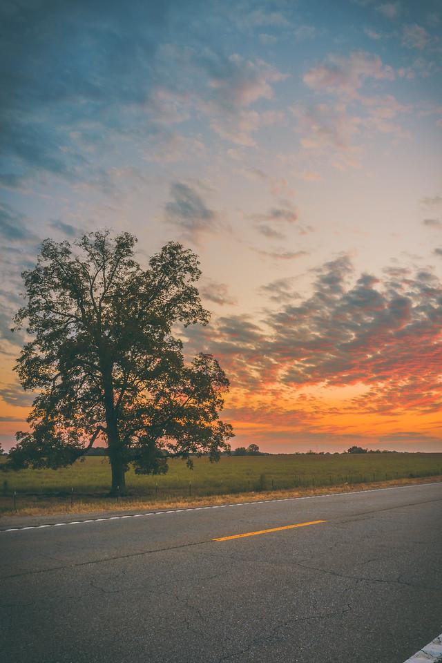 Highway Tree