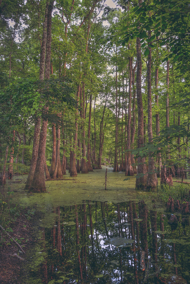 Section Line Swamp