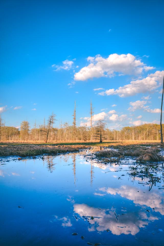 Swamp Reflection